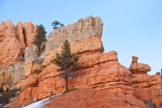USA/Utah/Garfield Co./Paunsaugunt Plateau/Red Canyon