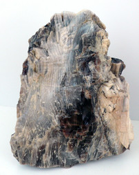 opalisiertes Holz