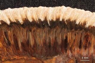 Argentinien/Patagonien/Santa Cruz, Provinz/Deseado, Departamento/Cerro El Cuadrado Fossil Forest (Parque Nacional Bosques Petrificados de Jaramillo, Jaramillo Petrified Forest)