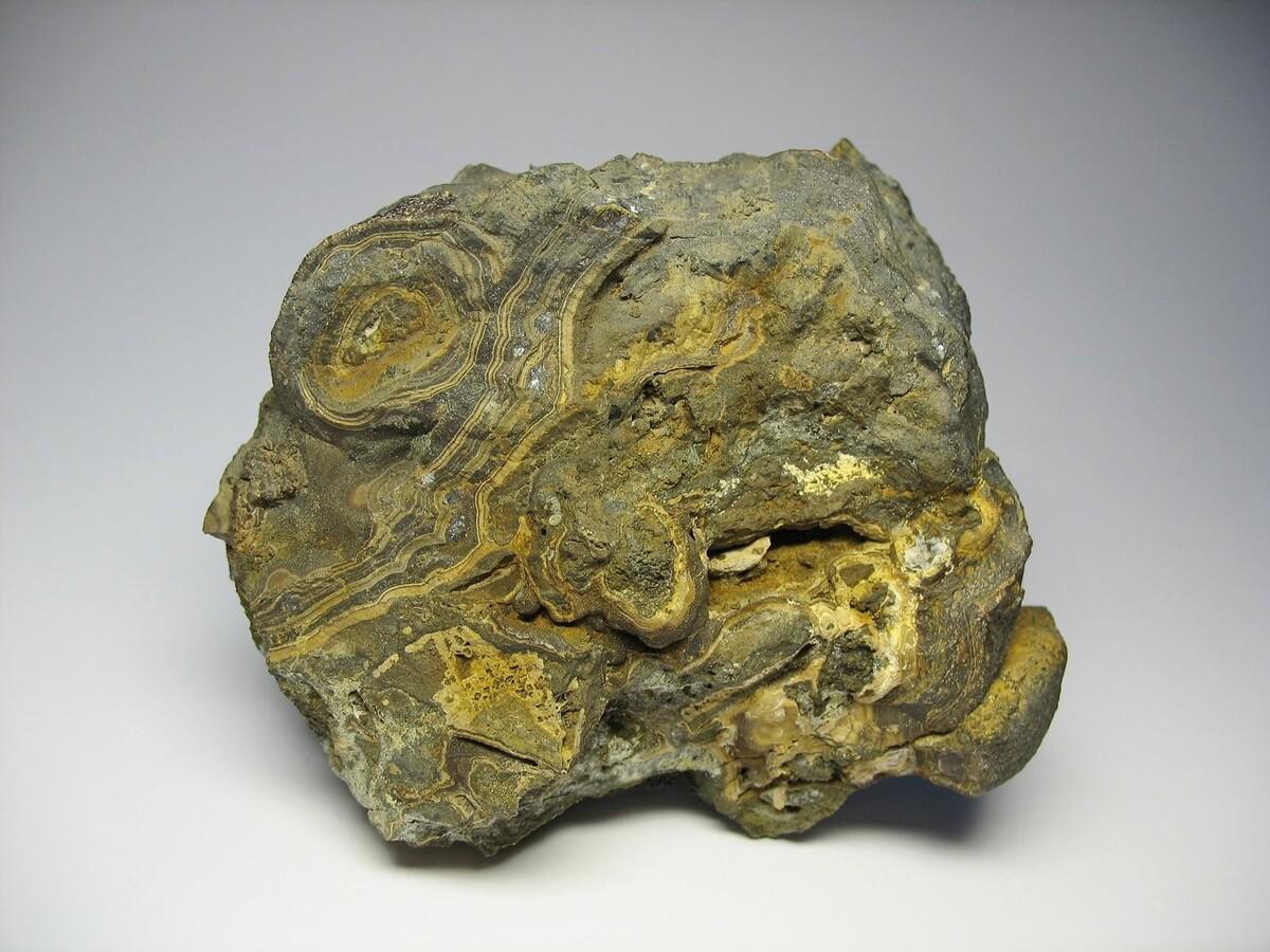 Kohlenstoff, der menschliche Fossilien datiert